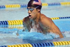 Competitive Swimmer Stock Image
