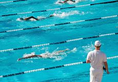 Competitive Swimming royalty free stock photography