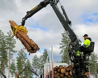 Competitor stacking wood in Finnish Log Loading Championships 20 Stock Image