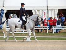 Competitore di Dressage Fotografie Stock
