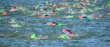 Competitors swimming in at the end of the swimming stage OF Triathlon. Royalty Free Stock Photos