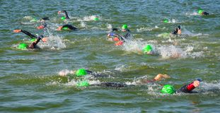 Competitors swimming in at the end of the swimming stage at the beginning of Triathlon. Stock Images