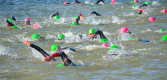 Competitors swimming in at the end of the swimming stage at the beginning of Triathlon. Stock Image