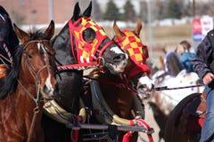 Competência do Chariot Fotografia de Stock Royalty Free