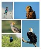 Compilación de pájaros de África meridional fotografía de archivo