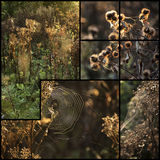 Compilation of beautiful Autumn landscape detail images Stock Images