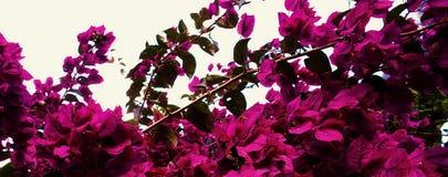 Compilation du macro 55 de fleurs photo stock