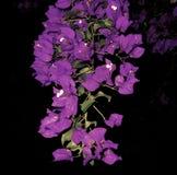 Compilation du macro 53 de fleurs images stock