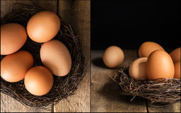 Compilation of fresh eggs images in moody natural lighting setti Royalty Free Stock Photos