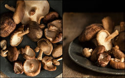 Compilation of images of Fresh shiitake mushrooms in moody natur Stock Image
