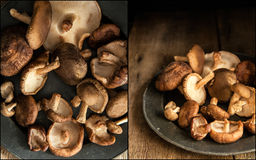 Compilation of images of Fresh shiitake mushrooms in moody natur Stock Images