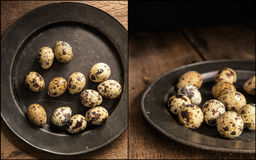 Compilation of moody natural lighting setting of quaills eggs wi Stock Photos