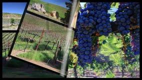 Compilazione di ciclaggio del paesaggio della vigna archivi video