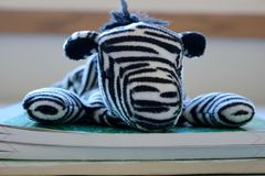 Compinche lindo de la gorrita tejida de la cebra: Rayas imágenes de archivo libres de regalías