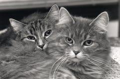 Compinches del gato Imagen de archivo