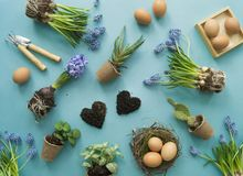 Compisition de Easter O processo de transplantar flores, vista superior Fundo para um cartão do convite ou umas felicitações Fotografia de Stock Royalty Free