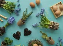 Compisition de Easter O processo de transplantar flores, vista superior Fundo para um cartão do convite ou umas felicitações Foto de Stock Royalty Free