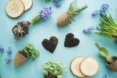 Compisition di Pasqua Il processo di trapianto dei fiori, vista superiore Priorità bassa per una scheda dell'invito o una congrat Fotografia Stock