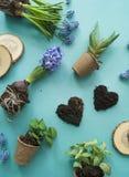 Compisition di Pasqua Il processo di trapianto dei fiori, vista superiore Priorità bassa per una scheda dell'invito o una congrat Immagine Stock