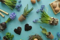 Compisition di Pasqua Il processo di trapianto dei fiori, vista superiore Priorità bassa per una scheda dell'invito o una congrat Fotografia Stock Libera da Diritti