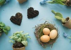 Compisition di Pasqua Il processo di trapianto dei fiori, vista superiore Priorità bassa per una scheda dell'invito o una congrat Immagini Stock