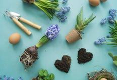Compisition di Pasqua Il processo di trapianto dei fiori, vista superiore Priorità bassa per una scheda dell'invito o una congrat Immagini Stock Libere da Diritti