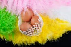 Compisition di Pasqua Tre uova in reticolato sull'inclinazione della piuma T Immagine Stock
