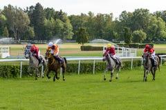 Compita para 3 grupos árabes do cavalo dos anos de idade II o 5 de setembro de 2015 em Wroclaw, Polônia Foto de Stock