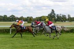 Compita para 3 grupos árabes do cavalo dos anos de idade II o 5 de setembro de 2015 em Wroclaw, Polônia Fotos de Stock