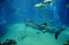 Complètement des poissons nageant Photos stock