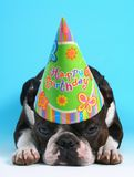 Compleanno del cane Fotografia Stock Libera da Diritti
