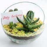 Compleanno della cartolina d'auguri buon in florarium Fotografia Stock Libera da Diritti