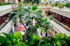 Complejo playero de Hyatt Regency Waikiki y área del atrio del balneario fotografía de archivo libre de regalías