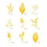 Complesso del mais del riso del grano dell'avena dell'orzo del raccolto dell'icona dei cereali illustrazione di stock