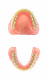 Complete Dentures. Both Upper and Lower arch from Occlusion view Stock Photos