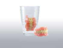 Complete Dentures in glass. With reflect Royalty Free Stock Photography