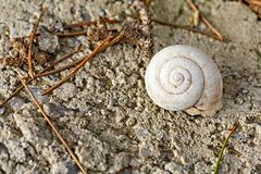 Complete dirty Nautilus Shell on ground background. Complete dirty Nautilus Shell on ground backgorund. Close-up royalty free stock photography
