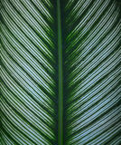 Complete Leaf. Organisms that thrive off to the side by a low articulate shining on the tree branches and leaves most often spread flat. Green color of Royalty Free Stock Image