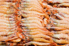 Complete picture of sea prawns Stock Image