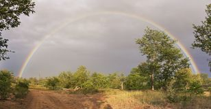 Complete rainbow in the bush after a rain storm Royalty Free Stock Images