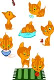 The complete red kittens Royalty Free Stock Image