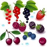 Complete set berry. On a white background vector illustration