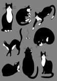 Complete set of cats.jpg. The complete set of cats of black color Stock Photography
