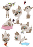 The complete set of cheerful Siamese kittens. Similar in a portfolio Stock Photos