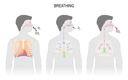 Complete un ciclo de la respiración, de la inspiración y de la expiración anatomía del sistema respiratorio stock de ilustración