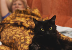 Completely black cat lying on a woman's legs Stock Photography