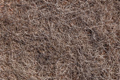 Completely dried out soil of Ponta do Rosto Madeira. Royalty Free Stock Photo