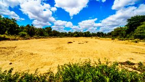 Completely dry river at the end of the dry season in Kruger National Park. One of the may completely dry rivers at the end of the dry season in Kruger National Royalty Free Stock Photos