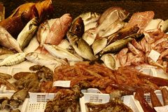 Completely freshly. Freshness of fish on of Europe most beautiful fish market in Catania, Sicily, Italy stock photography