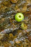 An apple in a river stock images